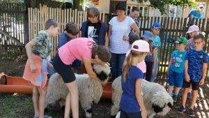děti u lam a ovcí